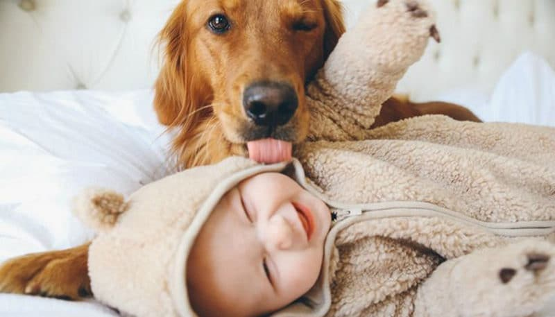 Infographic: When Dog Meets Baby