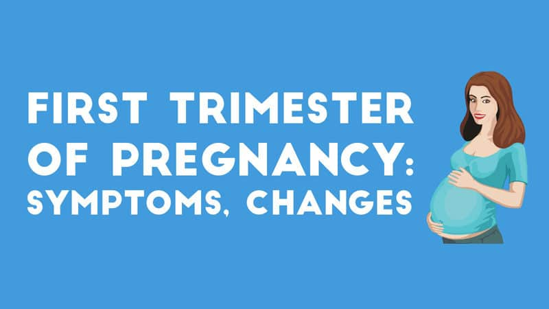 Infographic: First Trimester of Pregnancy- Symptoms, Changes, and More