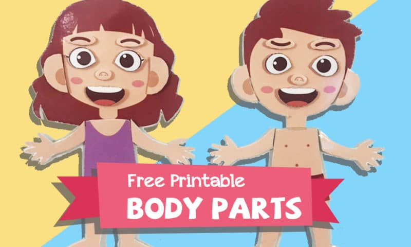 DIY: Human Body Parts Puzzle Game For Kids